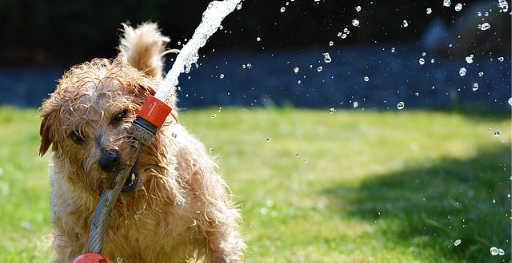 perro agua jardin
